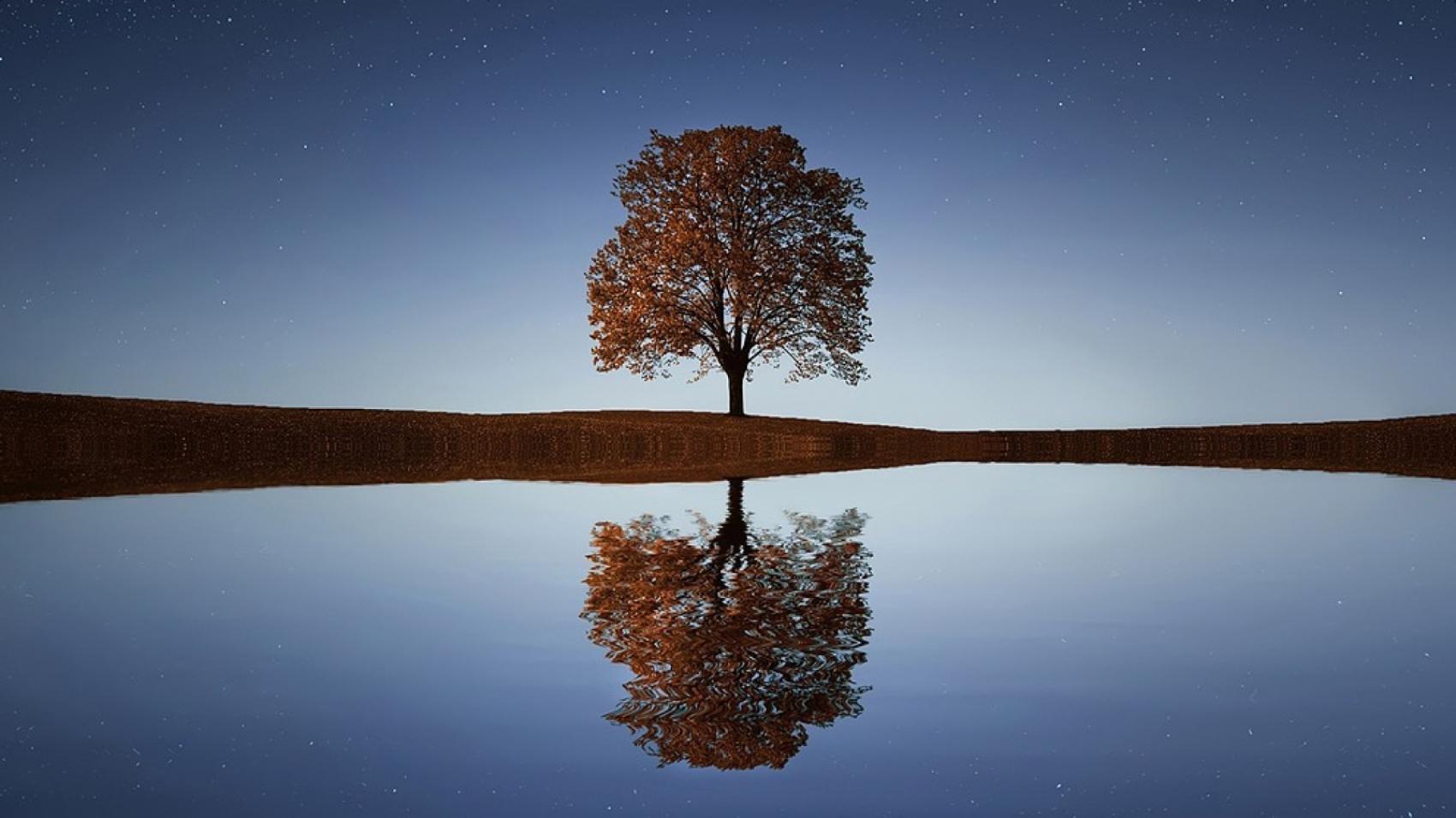 tree-838667_1280-1-1600x900